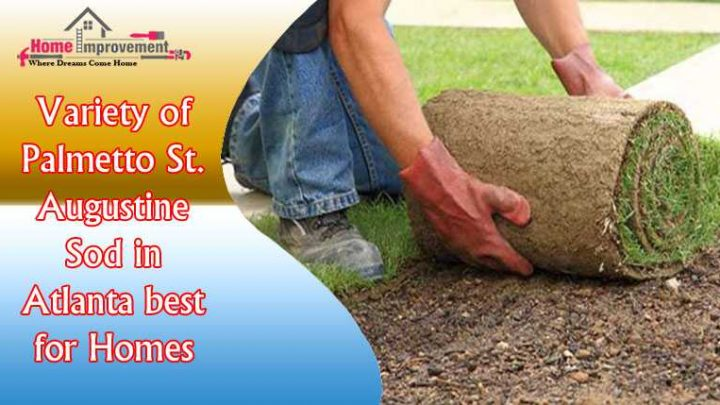 Variety of Palmetto St. Augustine Sod in Atlanta best for Homes